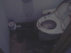 heatshock_toilet